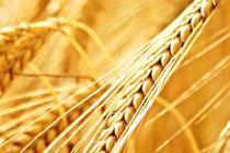 Gorgeous Grains